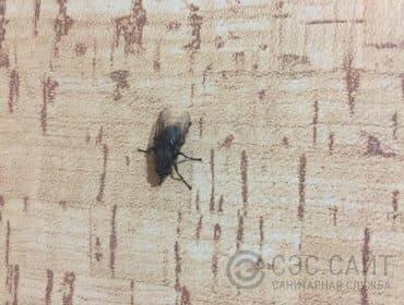 Фото мухи на стене