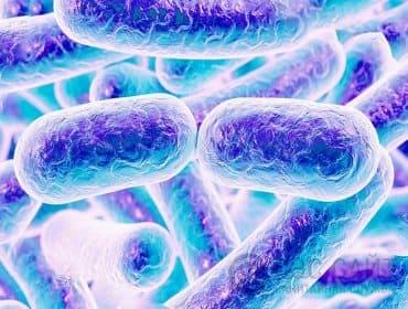 Иллюстрция бактерий