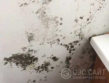 Фото балконной стены пораженной плесенью
