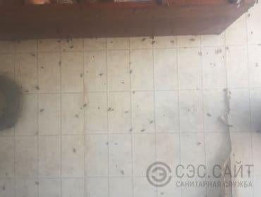 Дезинсекция в Санкт-Петербурге. Уничтожение тараканов