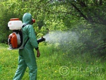 Фото дезинсектора в процессе обработки от комаров