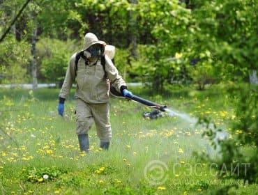 Фото дезинсектора во время обработки от комаров