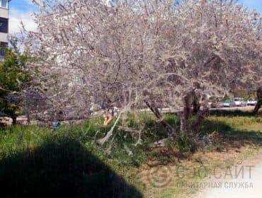 деревья, пораженные черемуховой молью