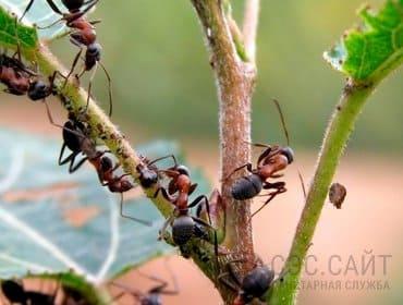 Муравьи на растениях