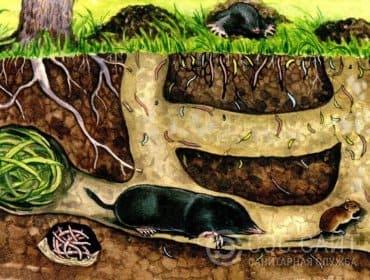 Схема подземных ходов