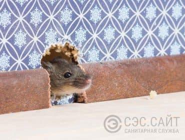 Мышь в норке