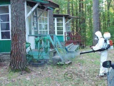 Обработка деревьев от жука усача орошением